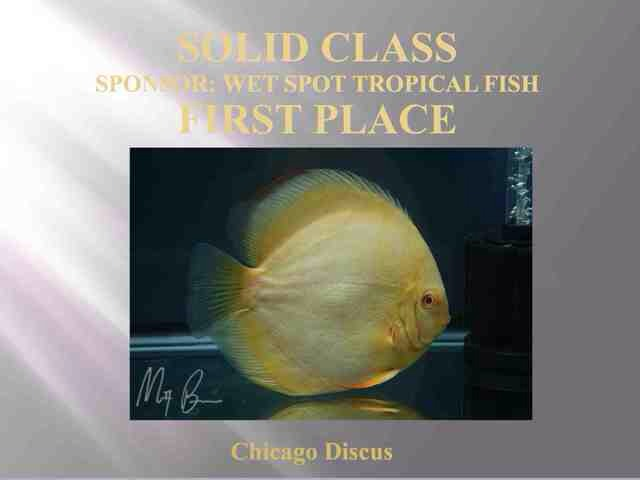 2014 1st Place - Solid Class Discus